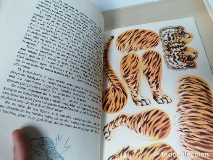 Coleccionismo Recortables: Zoología animada. Álbum n. 1 - Foto 3 - 211458831
