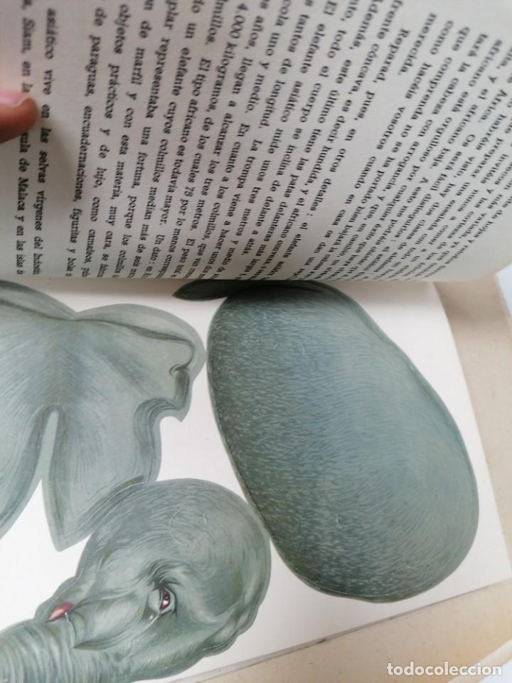 Coleccionismo Recortables: Zoología animada. Álbum n. 1 - Foto 4 - 211458831
