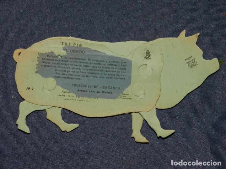 Coleccionismo Recortables: (M) EL CERDO NUM 7 , SUCESORES DE HERNANDO , MADRID , ANIMALES MOVIBLES , 25 X 13 CM - Foto 2 - 241065300