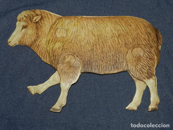 (M) EL CARNERO Y LA OVEJA NUM 9 , SUCESORES DE HERNANDO , MADRID , ANIMALES MOVIBLES , 25 X 18 CM (Coleccionismo - Recortables - Animales)