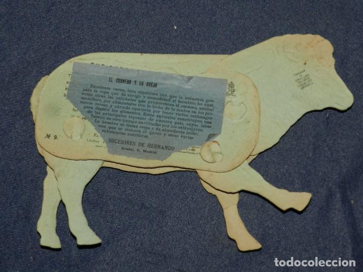 Coleccionismo Recortables: (M) EL CARNERO Y LA OVEJA NUM 9 , SUCESORES DE HERNANDO , MADRID , ANIMALES MOVIBLES , 25 X 18 CM - Foto 2 - 241065615