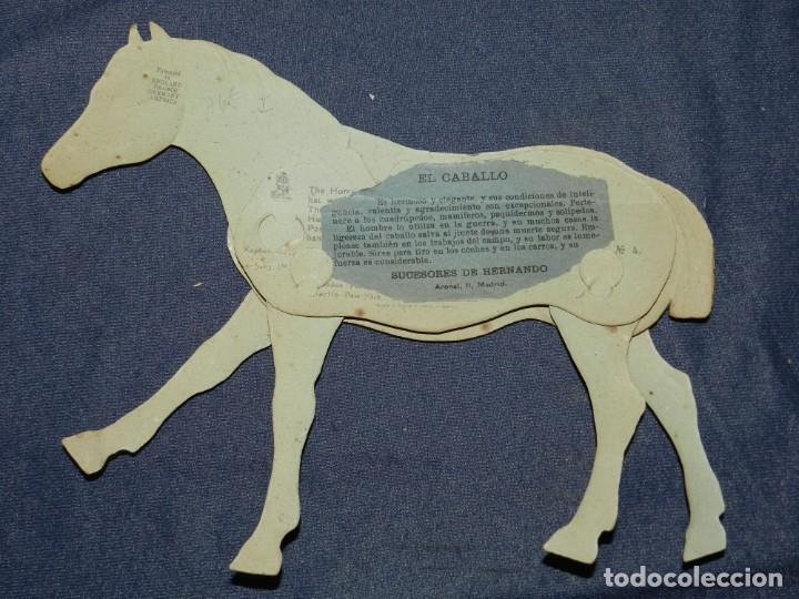 Coleccionismo Recortables: (M) EL CABALLO NUM 4 , SUCESORES DE HERNANDO , MADRID , ANIMALES MOVIBLES , 25 X 20 CM - Foto 2 - 241065745