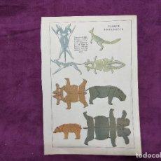 Colecionismo Recortáveis: HOJA CON RECORTABLE DE ANIMALES, PARQUE ZOOLÓGICO, UNOS 29 X 20 CMS. MEDIADOS XX.. Lote 241991975