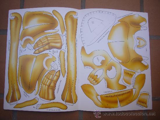 Coleccionismo Recortables: Recortable Esqueleto Humano. - Foto 3 - 32654099
