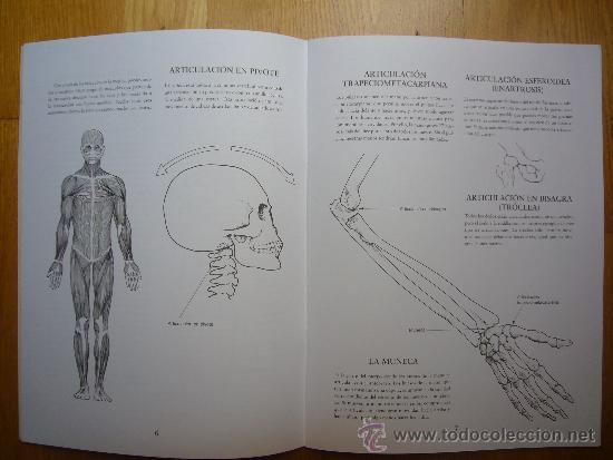 Coleccionismo Recortables: Recortable Esqueleto Humano. - Foto 4 - 32654099