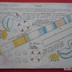 Coleccionismo Recortables: CONSTRUCCIONES EN MOVIMIENTO. 'PATOS'. EDICIONES LA TIJERA SERIE 15 Nº 15. TAMAÑO 23,3X33,3 CM.. Lote 132035394