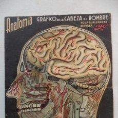 Coleccionismo Recortables: HOJA SUPLEMENTO REVISTA YO ANATOMIA GRAFICO DE LA CABEZA DE HOMBRE(YA MONTADA). Lote 160012638