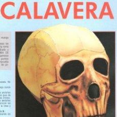 Coleccionismo Recortables: RECORTABLE CALAVERA MIR. RIALP 1990. Lote 232744838