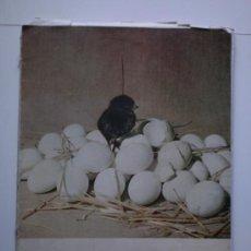 Coleccionismo de Revista Blanco y Negro: BLANCO Y NEGRO-MAYO 1957. Lote 26897981