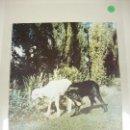 Coleccionismo de Revista Blanco y Negro: 1018- REVISTA BLANCO Y NEGRO 17 AGOSTO 1957 Nº 2363 PORTADA CORDERO Y PERRO (47). Lote 118579547