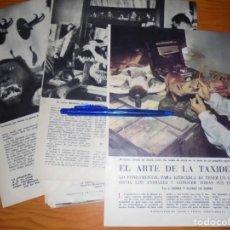 Coleccionismo de Revista Blanco y Negro: RECORTE PRENSA : EL ARTE DE LA TAXIDERMIA. BLANCO Y NEGRO, JULIO 1959. Lote 133622162