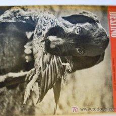 Coleccionismo de Revista Destino: REVISTA DESTINO 1672 DEL 18 OCTUBRE 1969. Lote 27122715