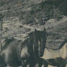 Coleccionismo de Revista Destino: REVISTA 1951 VALLFOGONA DEL RIPOLLES CABALLOS CORPUS EN OROTAVA TENERIFE SALSA ROMESCO ROMESCU. Lote 18336902
