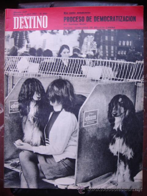 REVISTA DESTINO 1 ABRIL 1967 PORTADA CONCURSO DE BELLEZA CANINA (Coleccionismo - Revistas y Periódicos Modernos (a partir de 1.940) - Revista Destino)