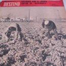 Coleccionismo de Revista Destino: REVISTA DESTINO AGRICULTURA. Lote 31302312