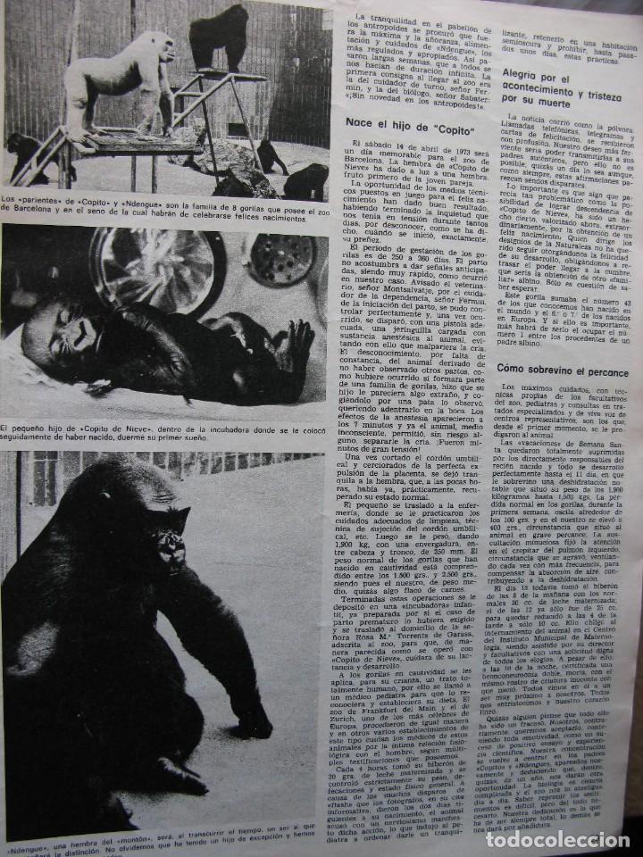 Coleccionismo de Revista Destino: PPRLY - CONCILIO DE DEMONIOS Y TERTULIA DE BRUJAS. HISTORIA DEL HIJO DE COPITO DE NIEVE. VER SUMARIO - Foto 6 - 86037564