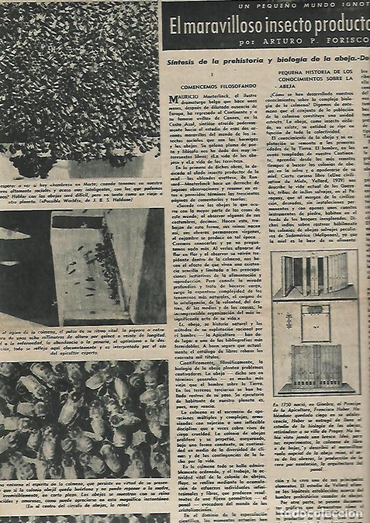 AÑO 1949 APICULTURA ABEJAS MIEL COLMENA PINTURAS ROMANICAS MUSEO DEL PRADO ERMITA CRUZ DE MADERUELO (Coleccionismo - Revistas y Periódicos Modernos (a partir de 1.940) - Revista Destino)