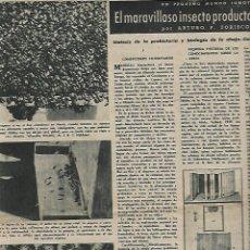 Coleccionismo de Revista Destino: AÑO 1949 APICULTURA ABEJAS MIEL COLMENA PINTURAS ROMANICAS MUSEO DEL PRADO ERMITA CRUZ DE MADERUELO. Lote 12027661