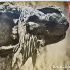 Coleccionismo de Revista Destino: REVISTA DESTINO 1672 DEL 18 OCTUBRE 1969. Lote 285293308