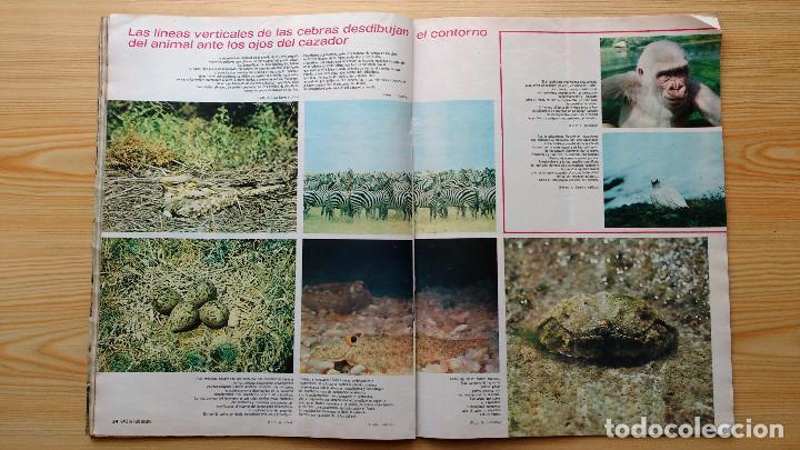 Coleccionismo de Revista Gaceta Ilustrada: GACETA ILUSTRADA Nº 835-1972 - LA MATANZA DE MUNICH - PUBLICIDAD SCHWEPPES - DKW MEVOSA - Foto 11 - 86505908