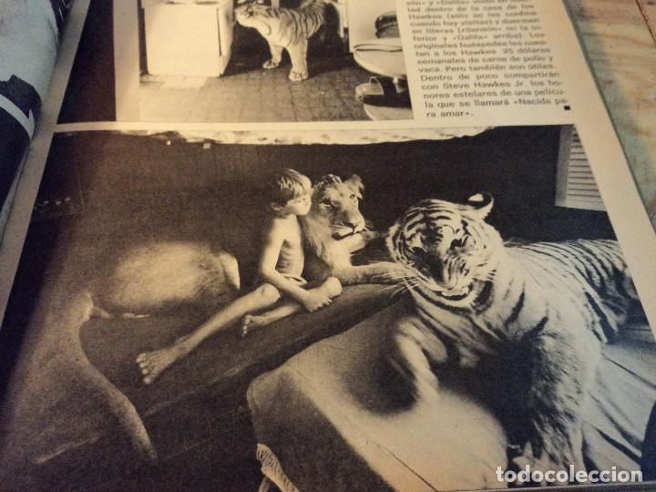 Coleccionismo de Revista Gaceta Ilustrada: gaceta nº 864 massiel, loli de los leprosos, ltalia escandalo de las falsas confesiones 1973 - Foto 6 - 105986179