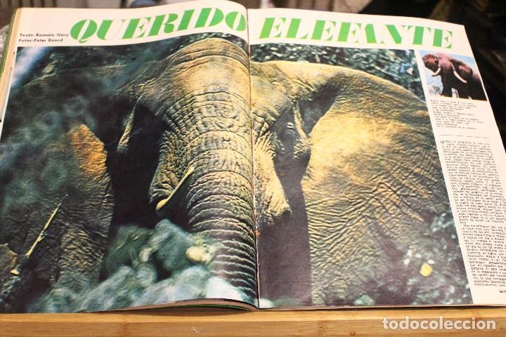 Coleccionismo de Revista Gaceta Ilustrada: GACETA ILUSTRADA 604 AÑO 1968 ELEFANTE VIETNAM ORENSE BISSET SENSORIAL AUGER MAFIA OBESO POLUCION - Foto 3 - 201899592