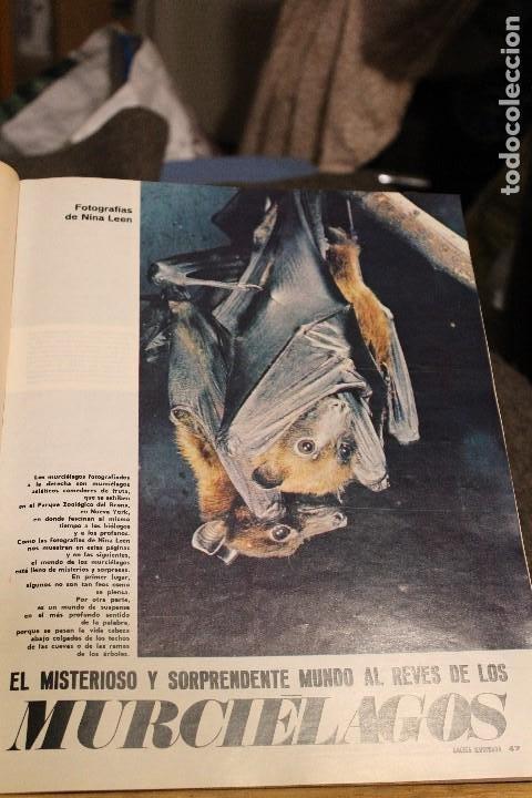 Coleccionismo de Revista Gaceta Ilustrada: GACETA ILUSTRADA 606 AÑO 1968 PARIS MURCIELAGOS HEPBURN ELEFANTES COMUNISTAS DAYAN LINDSAY AVION - Foto 3 - 201901515