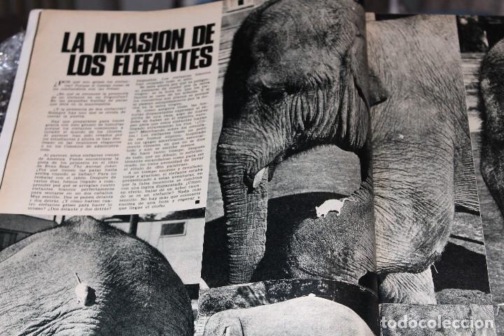 Coleccionismo de Revista Gaceta Ilustrada: GACETA ILUSTRADA 606 AÑO 1968 PARIS MURCIELAGOS HEPBURN ELEFANTES COMUNISTAS DAYAN LINDSAY AVION - Foto 11 - 201901515