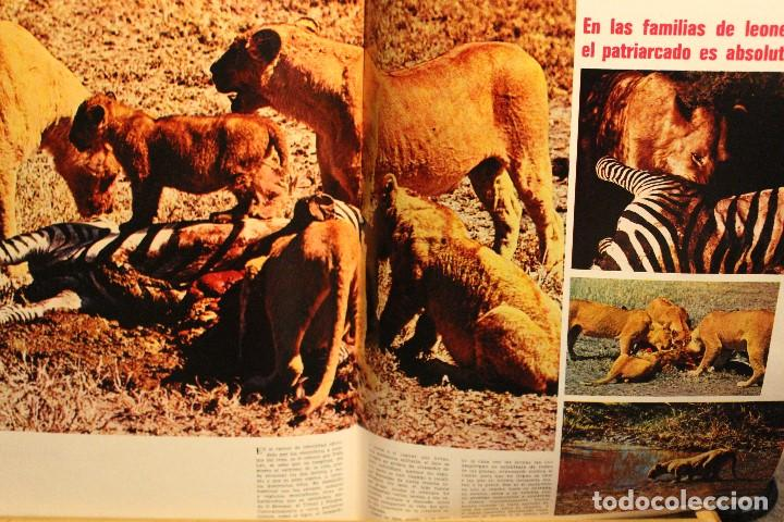 Coleccionismo de Revista Gaceta Ilustrada: GACETA ILUSTRADA Nº 676 AÑO 1969 / HO CHI MINH FELLINI CITROEN PERLAS LINDA JACKIE LEON ATLANTIDA - Foto 8 - 203010127