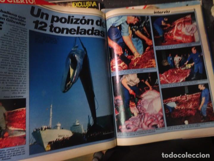 Coleccionismo de Revista Interviú: INTERVIU Nº315,PALMAR DE TROYA, MARÍA ASQUERINO,CASO VILA CARBONELL ,PANTOJA-PAQUIRRI, GEOS ALEMANES - Foto 30 - 266045573