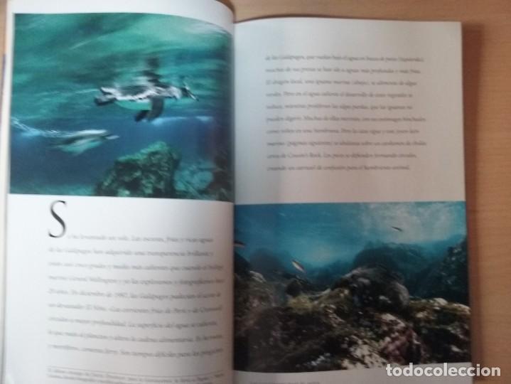 Coleccionismo de National Geographic: REGRESO A LA BATALLA DE MIDWAY. VOLUMEN 4, NÚMERO 4. ABRIL 1999. NATIONAL GEOGRAPHIC - Foto 3 - 155335362