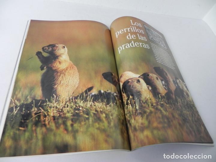 Coleccionismo de National Geographic: REVISTA NATIONAL GEOGRAPHIC VOL. 2 Nº4 ABRIL 1998 (PERRILLO DE LAS PRADERAS) - Foto 3 - 210117335