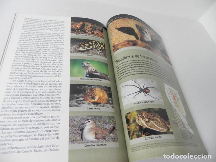 Coleccionismo de National Geographic: REVISTA NATIONAL GEOGRAPHIC VOL. 2 Nº4 ABRIL 1998 (PERRILLO DE LAS PRADERAS) - Foto 4 - 210117335
