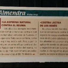 Coleccionismo de Revista Pronto: FICHA Nº 42. LOS ALIMENTOS. REMEDIOS Y TRUCOS REVISTA PRONTO. ALMENDRA.. Lote 185954911