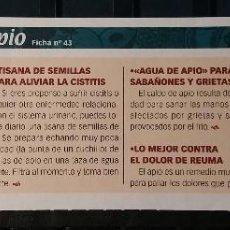 Coleccionismo de Revista Pronto: FICHA Nº 43. LOS ALIMENTOS. REMEDIOS Y TRUCOS REVISTA PRONTO. APIO.. Lote 185957111