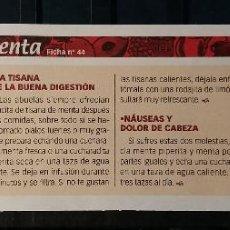 Coleccionismo de Revista Pronto: FICHA Nº 44. LOS ALIMENTOS. REMEDIOS Y TRUCOS REVISTA PRONTO. MENTA.. Lote 185957477