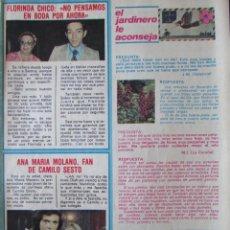 Coleccionismo de Revista Pronto: RECORTE REVISTA PRONTO Nº 438 1980 CAMILO SESTO, ANA MARIA MOLANO, FLORINDA CHICO. Lote 211976637