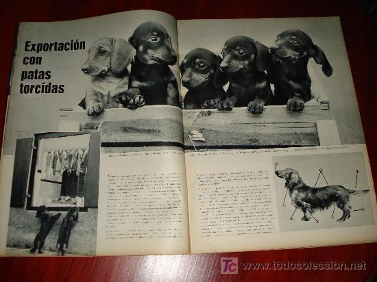 Coleccionismo de Revistas y Periódicos: REVISTA SCALA INTERNACIONAL- EDICION ESPAÑOLA - Nº10 OCTUBRE 1961 - AKIKO - Foto 5 - 8898758