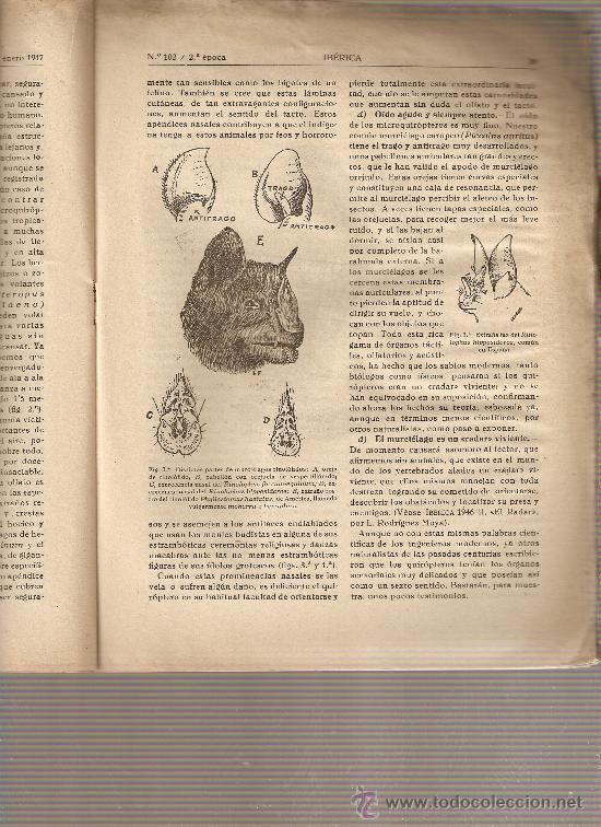 REVISTA IBERICA 102.AÑO 1947.MURCIELAGOS. (Coleccionismo - Revistas y Periódicos Modernos (a partir de 1.940) - Otros)