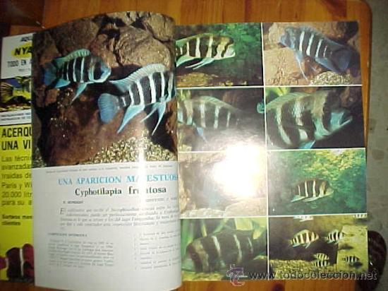 Coleccionismo de Revistas y Periódicos: AQUARAMA. REVISTA DE ACUARIOFILIA. Nº 1. AÑO 1º, 1981.* - Foto 2 - 9456212