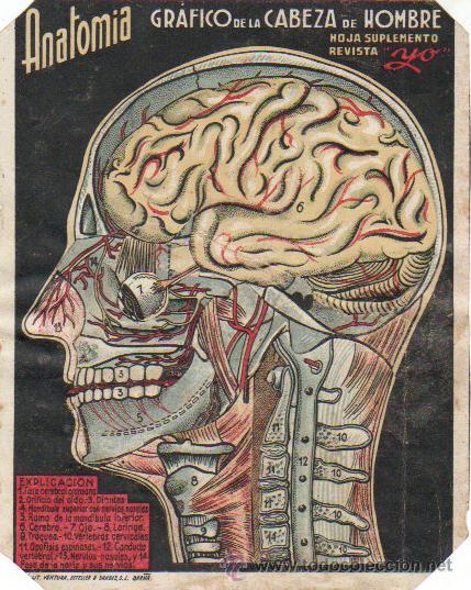 anatomia-grafico de la cabeza de hombre-hoja su - Comprar Otras ...