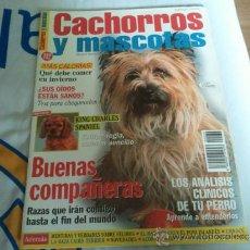 Coleccionismo de Revistas y Periódicos: REVISTA CACHORROS Y MASCOTAS BUENAS COMPAÑERAS COMO NUEVA. Lote 36675697