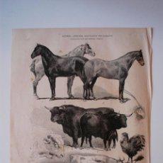 Coleccionismo de Revistas y Periódicos: GRABADO DE LA ILUSTRACION ESPAÑOLA Y AMERICANA ORIGINAL 1880.TERCERA EXPOSICION DE GANADOS DE MADRID. Lote 51941960