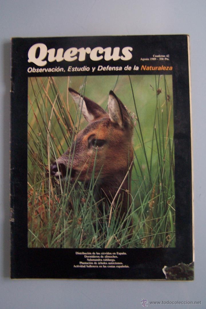 REVISTA QUERCUS. CUADERNO 42. AGOSTO 1989 (Coleccionismo - Revistas y Periódicos Modernos (a partir de 1.940) - Otros)
