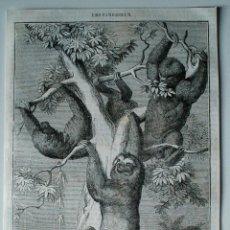 Coleccionismo de Revistas y Periódicos: GRABADO DE REVISTA ORIGINAL 1856. LOS PEREZOSOS. Lote 54029216