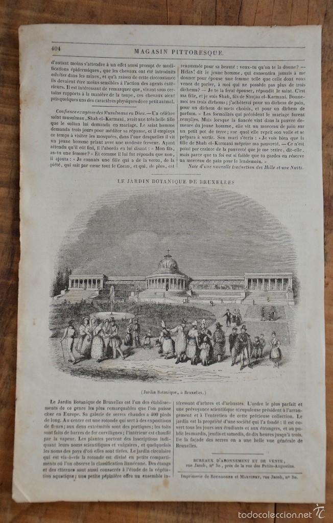 HOJA REVISTA-GRABADO ORIGINAL 1856. JARDIN BOTÁNICO, EN BRUSELAS (Coleccionismo - Revistas y Periódicos Antiguos (hasta 1.939))