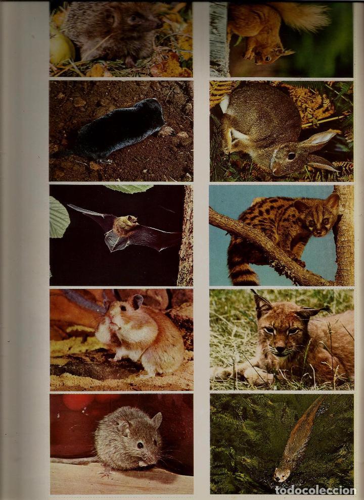 Coleccionismo de Revistas y Periódicos: EURO 2000 - N 7 - MAMIFEROS SALVAJES - ED. VICENS VIVES - COMPLETO - CROMOS SIN PEGAR - SIN USAR - Foto 2 - 93365810