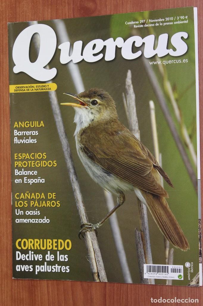 REVISTA QUERCUS - CUADERNO 297 - NOVIEMBRE 2010 - ANGUILA, AVES PALUSTRES CORRUBEDO (Coleccionismo - Revistas y Periódicos Modernos (a partir de 1.940) - Otros)