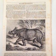 Coleccionismo de Revistas y Periódicos: HOJA GRABADO REVISTA ORIGINAL MEDIADOS SIGLO XIX. EL RINOCERONTE. Lote 103108531