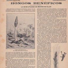 Coleccionismo de Revistas y Periódicos: HONGOS BENÉFICOS, LA GRAN UTILIDAD DE MUCHOS DE ELLOS - 1904. Lote 103807823